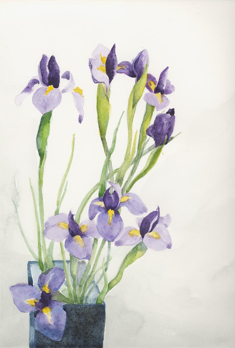 coco-connolly_purpleIris