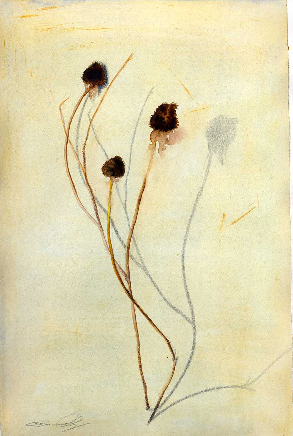 Weeds, watercolor painting, Coco Connolly, artist