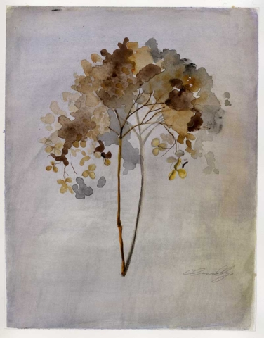 hydrangea, dried flowers, Fall, watercolor painting, Coco Connolly, artist