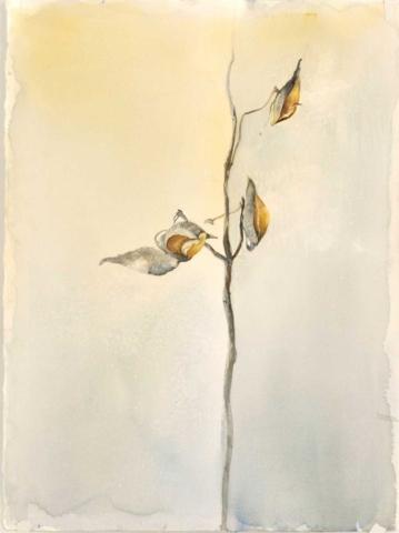 Milkweek, watercolor painting, Coco Connolly, artist