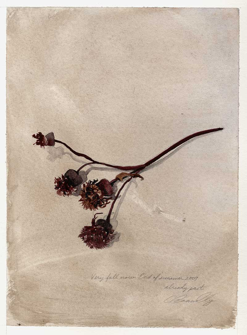 Fall, dried weeds, watercolor painting, Coco Connolly, artist