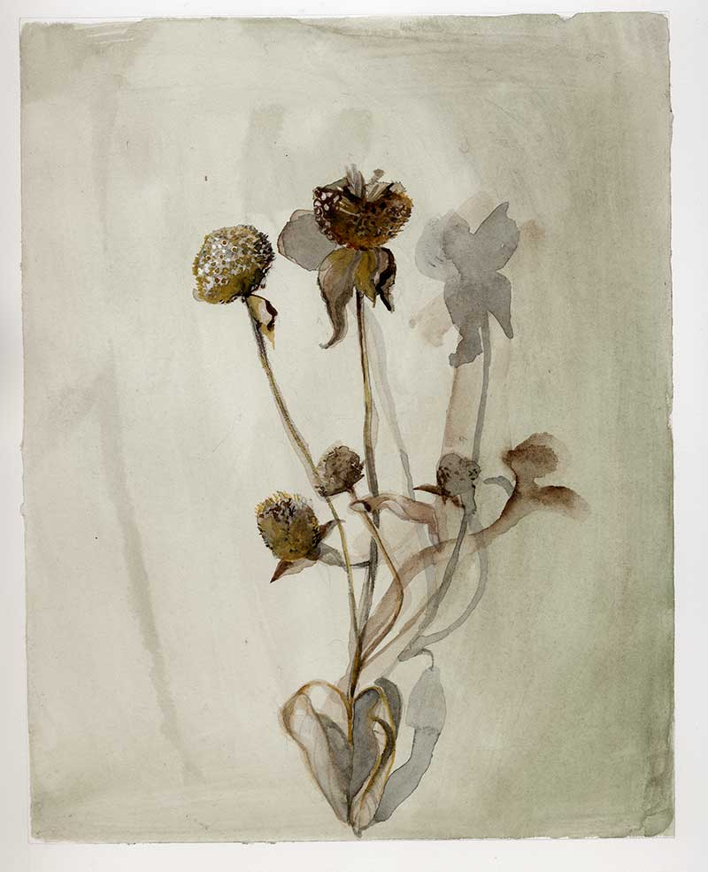 Fall, dried weeds, dead flowers, watercolor painting, Coco Connolly, artist